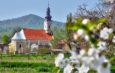 Mirisni raskoš proljeća