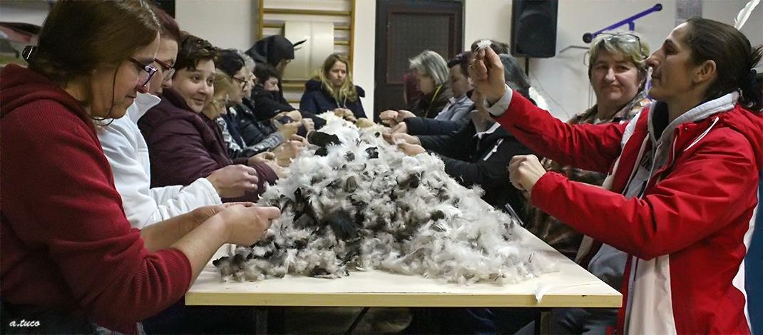 Čijalo perja