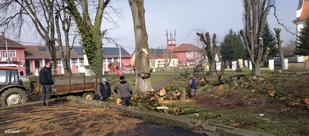 Uređivanje drvoreda na Placu